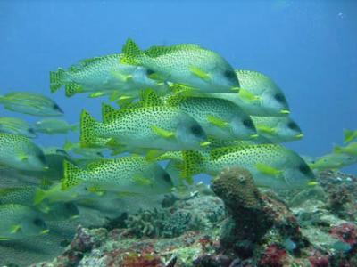 Подводное плавание в Мадагаскаре